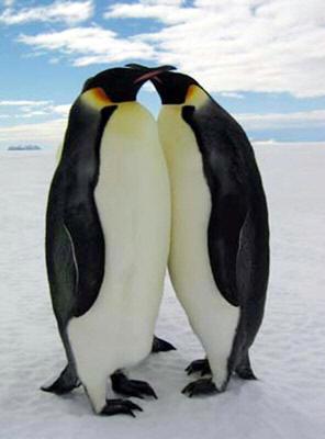 La Natura è il più autorevole testimone dell'universalità dell'Amore.