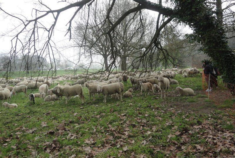 Il gregge un perfetto 39 tosa erba 39 da citt gli stati - La pagina della colorazione delle pecore smarrite ...