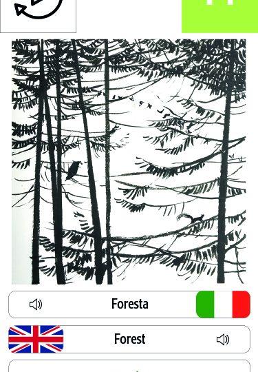 foresta_gioiamarchegiani