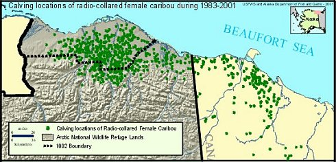 A map of Caribou calving grounds, 1983–2001, fonte U.S. Fish and Wildlife Service