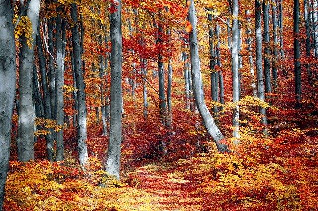 Foreste Italia Autunno