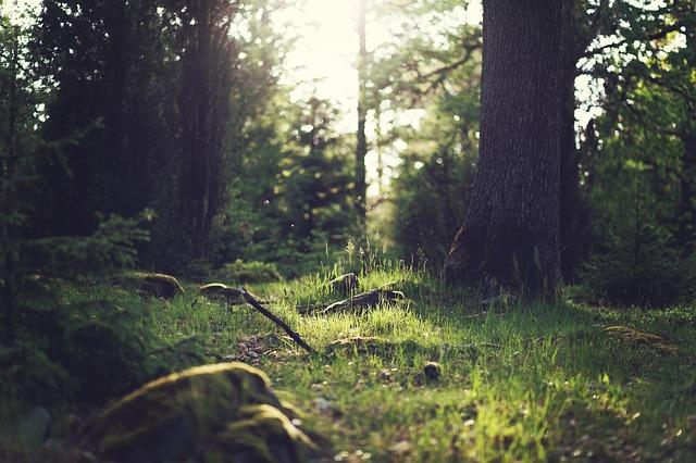 Foreste Italia
